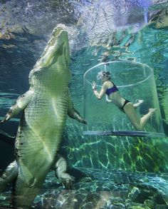Cage diving with a gigantic crocodile in Darwin, Australia