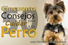 101 mascotas   disfraces para perros   disfraces mascotas: 50 Consejos para cuidar un perro adecuadamente