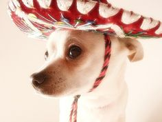 When I go to Mexico I am bringing one back for my Daisy.. The hat..