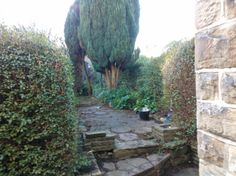 10.)  Monday was garden trimming day & Yoda wielded the hedge strimmer-sabre to the back of the garden...