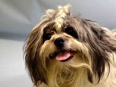A1047029- SPANKY SUPER URGENT! HIS LISTING SAYS $300 DONATION FOR A NEW HOPE RESCUE THAT PULLS HIM! THAT SURE WOULD HELP! TO BE DESTROYED TODAY 8/9/15 OR TOMORROW, MAY STILL BE TIME! TERRIFIED, SCARED, HEARTBROKEN N LOST SPANKY MUST FEEL! WE R HIS ONLY VOICE N HOPE FOR SURVIVAL, WONT U HELP SAVE HIS LIFE? HE DESERVES LOVE, LIFE N A FOREVER HOME, PLEASE MAKE HIS WISH COME TRUE! RESCUE ONLY! information.urgentpodr.org