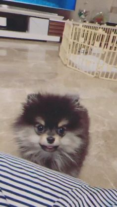 Kim Taehyung he loves being called Daddy but the thing he loves most is getting fucked in the ass by his Baby Boy Animals And Pets, Baby Animals, Cute Animals, Bts Taehyung, Bts Bangtan Boy, Jimin, Bts Dogs, Wattpad, Bts Pictures