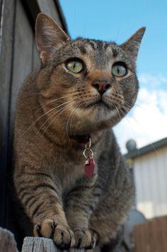 32 Totes Adorbs Photos Of Your Cats http://gizmodo.com/32-totes-adorbs-photos-of-your-cats-1721901736?utm_content=bufferbbd75&utm_medium=social&utm_source=pinterest.com&utm_campaign=buffer #cats