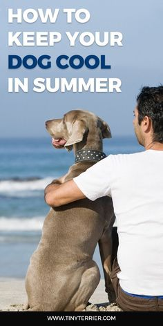The summer sun is here – yay! It's important to keep your dog cool in the summer months to ensure they stay healthy and don't over-heat. Dog Health Tips, Dog Health Care, Puppy Training Tips, Training Your Dog, Frozen Dog, Summer Dog, Dog Behavior, Dog Walking, Dog Care