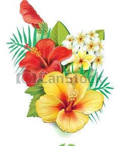 EPS Vectors of Arrangement from hibiscus flowers csp15729199 - Search Clip Art, Illustration, Drawings and Clipart Vector Graphics Images