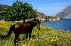 Horse in Stavrou (Patmos Island)