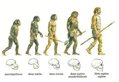 Homo Erectus Standing Up - Yahoo Search Results Yahoo Image Search Results Homo Habilis, Darwin's Theory Of Evolution, Human Evolution, Darwin Theory, Third Grade Science, Forensic Anthropology, Biological Anthropology, Early Humans, Cultural Diversity