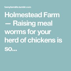 Holmestead Farm — Raising meal worms for your herd of chickens is so...