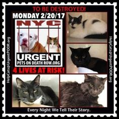 4 PRECIOUS KITTIES ON URGENT LIST 2B DESTROYED TOMORROW. EVERY NIGHT WE TELL THEIR STORIES...