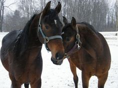Gifts for horse lovers and their equine friends can be easy to find!