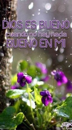 #DiosEsBueno facebook.com/jesusteamamgaministries