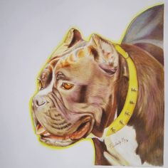 MAMBA AMERICAN BULLY DRAWING COLORED PENCILS