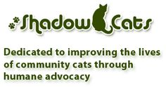 Shadow Cats is a rescue(not a shelter) dedicated to the care of our current resident population of ill, immune compromised, injured and senior cats.
