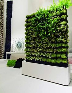 green room divider, good for a kitchen having fresh herbs when every you need them