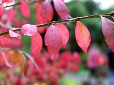Hello November, December, Dean, Gardens, Autumn, Closure, Times, Winter, Plants