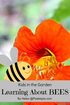 Garden Science: Learning about Bees in the Garden Preschool Science, Science For Kids, Preschool Garden, Mad Science, Teaching Kids, Kids Learning, Bee Safe, Bee Activities, Bee Crafts