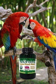8b46d1522 Avitech AviGreens Super Food Bird Supplement – 4 oz -- More info could