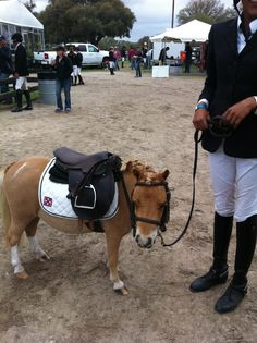 The littlest superstar at HITS Ocala. © EquiFit, inc.