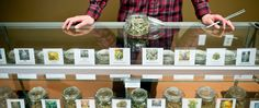 Study: Your Budtender Might Be Giving You Bogus Strain Information