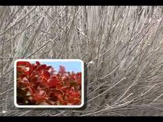Kalendarz przycinania krzewów, drzewek, roślin - YouTube
