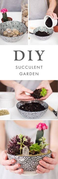 DIY Succulent Garden! Choose your favorite mixture of colorful cacti and earthy greens to make this project all your own.