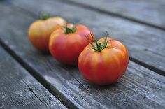 Jersey Tomatoes - Terry DeLuco on Fine Art America