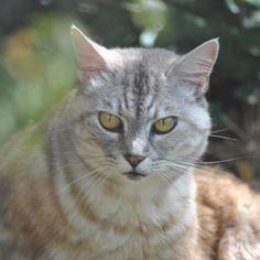 Luna, staring me down... 3/3    #luna #cat #cats #pet #petstagram #nature #kitten #kittens #catstagram #cutie #pets #kitty #catlovers #catsofinstagram #animal #sweet #funpetlove #catlover #ilovemycat #ilovemypet #instapets #petsagram #picpets #instacat #love #music #faces #coffee