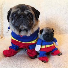 """Click visit site and Check out Best """"Pug"""" T-shirts. This website is excellent. Tip: You can search """"your name"""" or """"your favorite shirts"""" at search bar on the top. Super Cute Animals, Cute Baby Animals, Funny Animals, Silly Dogs, Funny Dogs, Sweet Dogs, Baby Pugs, Pug Puppies, Cute Pugs"""