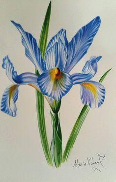 Iris от PomegranateArtMaria на Etsy