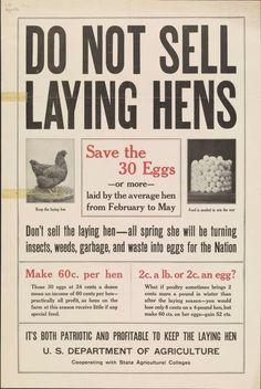 Do not sell laying hens save the 30 eggs or m...