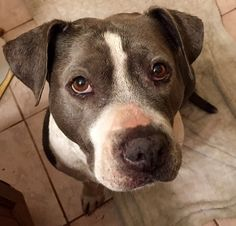 Help save Justice, an amazingly kind rescue companion!