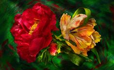 David Bishop Photography | Florals | 4
