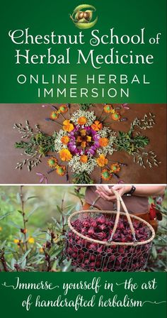 The Herbal Immersion Program Is The Most Comprehensive Online Course Teaching The Vital Skills Of Handcrafted Herbalism- - Growing Herbs, Making Medicine, Foraging, Botany, And Therapeutics. Pre-Registration Sale Running Now Through April Healing Herbs, Medicinal Plants, Natural Healing, Natural Herbs, Natural Foods, Herbal Remedies, Home Remedies, Natural Remedies, Health Remedies