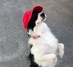 You are sure to find your next Border Collie name in this list of 125 Border Collie names Best Dog Names, Best Dogs, Border Collie Names, Border Collies, Smartest Dog Breeds, Choosing A Dog, Collie Dog, Archie, Rogues