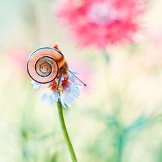 Snail by Magda Wasiczek Fotografia Macro, Animal Kingdom, Reptiles, Cute Animals, Small Animals, Nature Photography, Wildlife, Illustration, Creatures