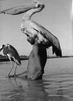 black & white photography | bird | pelican | nature | man and animal | stalk | at one | www.republicofyou.com.au