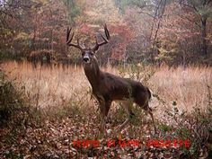 Whitetail Buck---Field & Stream--The 50 Best Trail Cam Photos