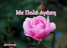 giortazo.gr: Με Πολύ Αγάπη  ..giortazo.gr Love, Flowers, Plants, Amor, Plant, Royal Icing Flowers, Flower, Florals, Floral