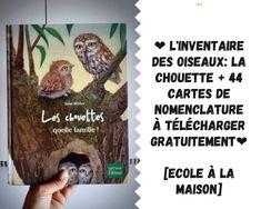L'inventaire des oiseaux: la chouette + 44 cartes de nomenclature à télécharger [IEF] Zoology, Owls, Cards