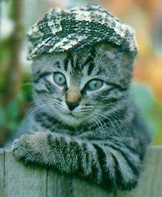 Hellooo, Chap!   p-u-r-r-fect cap for this little chap!!