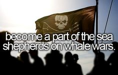 become a part of the sea shepherds on whale wars