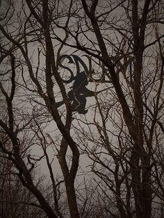 salem, massachusetts, witch, tree, new england, nancies photography
