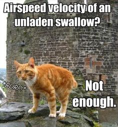 unladen-swallow
