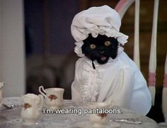 Salem Saberhagen is the cat from the American comic Sabrina the Teenage Witch. Here are the greatest things he said. Salem Saberhagen is the cat from the American comic Sabrina the Teenage Funny Cats, Funny Animals, Cute Animals, Talking Animals, Salem Sabrina, Sabrina Cat, Crazy Cat Lady, Crazy Cats, Reaction Pictures