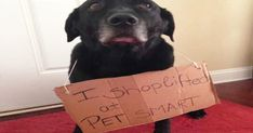 Pitiful dog shaming photos