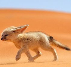 #cute #animals