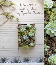 Love the collection of plants in this stunning wall garden.
