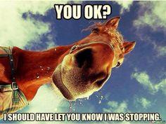 Funnyhorse#