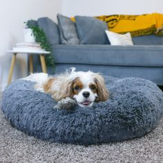 Cozy Calming Bed for Dogs – Alpha Paw LLC Call It Sleep, House Breaking A Puppy, Small Poodle, Very Small Dogs, Puppy Pads, Dog Training Pads, Dog Diapers, West Highland Terrier, New Beds