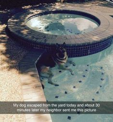 Spread Humour Over The World Funny Animal Pictures, Cute Funny Animals, Funny Cute, Funny Dogs, Cute Dogs, Animals And Pets, Baby Animals, Dog Memes, Humor